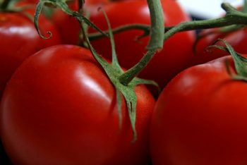 How to Prune Tomatoes for a High Yield - Gardening, How to Grow Tomatoes, Tomatoe Growing Tips, How to Grow Tons of Tomatoes, Vegetable Growing Tips and Tricks, How to Grow The Best Tomatoes, Popular Pin