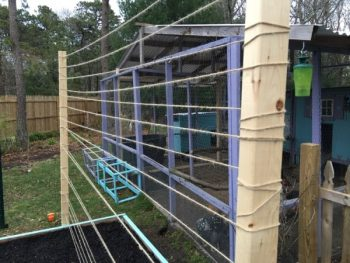 10 DIY Trellis Ideas - DIY Garden Trellis, Garden Trellis Ideas, Gardening Trellis Projects, Outdoor Projects, Outdoor DIY Projects, Handmade Garden Trellis, DIY Garden Stuff, Popular Pin