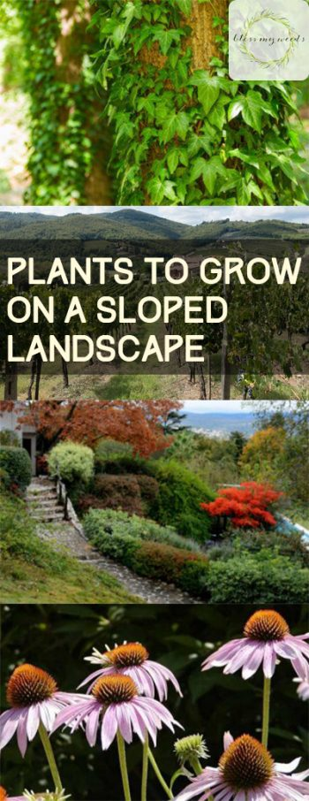 Plants to Grow On a Sloped Landscape - Plants for Sloped Yards, Plants for a Sloped Lawn, How to Landscape A Sloped Lawn, Gardening, Gardening Hacks, Landscaping, Landscaping Tips and Tricks, Popular Pin