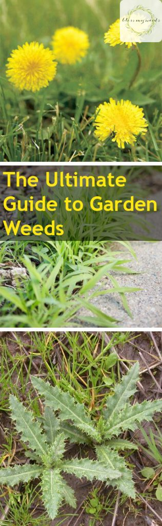 The Ultimate Guide to Garden Weeds - Garden Weeds, Garden Weeds Guide, Gardening, Gardening Hacks, Garden Care, Weed Care for Your Garden, Garden Care