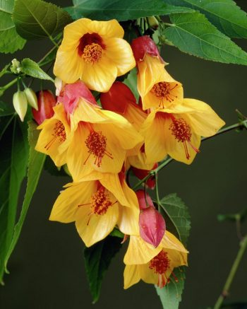 12 Plants That Will Bring the Hummingbirds to Your Garden - Plants That Attract Hummingbirds, Gardening Tips and Tricks, Gardening Hacks, Flower Gardening, Flower Gardening Tips and Tricks, How to Bring Hummingbirds To Your Garden