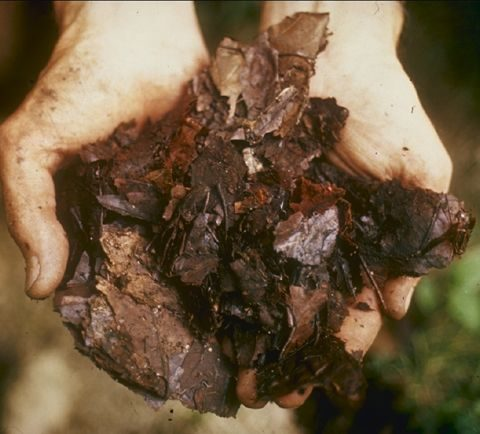 Do You Know the Difference Between Hot and Cold Composting? - Composting, Hot and Cold Composting, How to Compost, Composting TIps and Tricks, Gardening, Natural Living, Organic Home, Organic Home Hacks, Popular Pin
