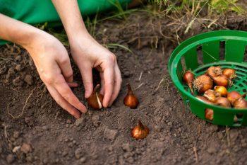 Put These Items on Your Fall Gardening To-Do List - Fall Gardening, Fall Gardening Tips and Tricks, Gardening for Fall, Gardening To Do List, Gardening, Gardening 101, Garden Hacks, Popular Pin