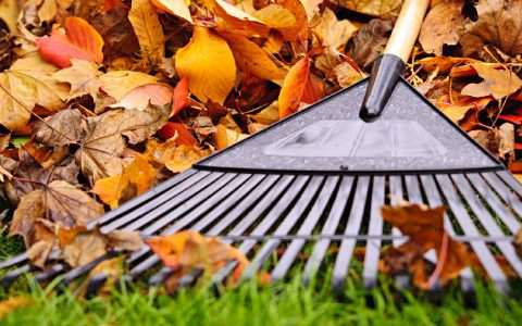 Put These Items on Your Fall Gardening To-Do List - Fall Gardening, Fall Gardening Tips and Tricks, Gardening for Fall, Gardening To Do List, Gardening, Gardening 101, Garden Hacks, Popular Pin