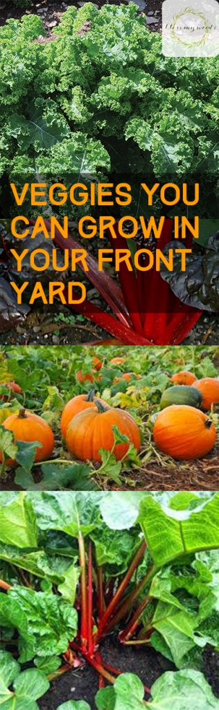 Veggies You Can Grow in Your Front Yard - Vegetable Garden, Vegetable Gardening, How to Grow Vegetables In Your Front Yard, Front Yard Gardening, Gardening Hacks, Gardening 101, Popular Pin