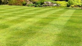 How to Care for Your Lawn in the Fall for Maximum Spring Growth - Lawn Care, Lawn Care Tips and Tricks, How to Care for Your Lawn, Caring for Your Lawn, Garden and Landscape, Landscaping Tips and Tricks, Popular Pin