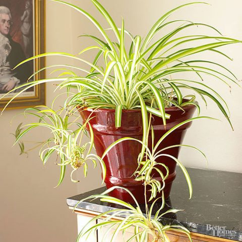 Indoor Plants That Need Little Sunlight - Indoor Plants, Indoor Gardening, Indoor Gardening Tips and Tricks, Gardening Hacks, Gardening, Gardening 101, Gardening for Beginners