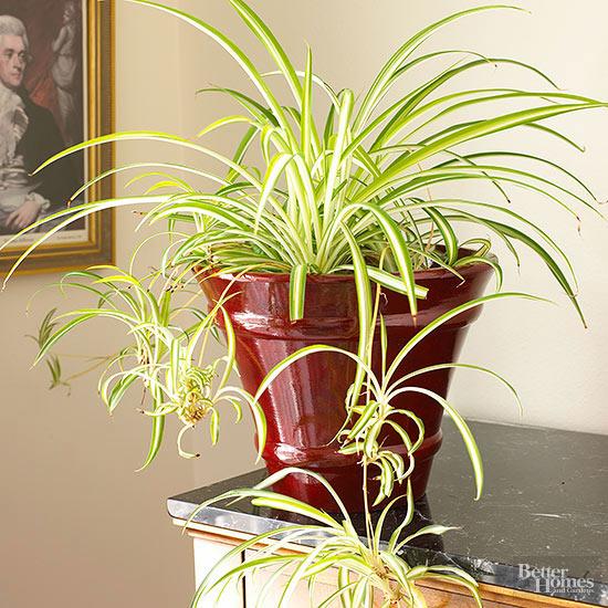 Prev1 Of 8next Indoor Plants That Need Little Sunlight