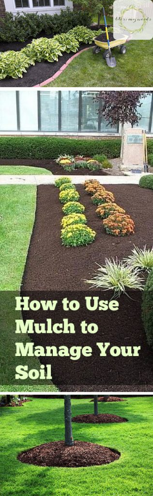 How to Use Mulch to Manage Your Soil - Using Mulch, How to Use Mulch, Managing Soil, Manage Your Soil With Mulch, Landscaping, Landscaping Tips and Tricks, Gardening, Gardening Hacks.