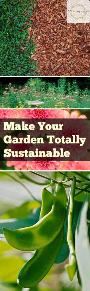 Make Your Garden Totally Sustainable - Gardening, Gardening Hacks, Gardening 101, How to Make Your Garden Sustainable, Sustainable Gardening, Gardening Tips and Tricks