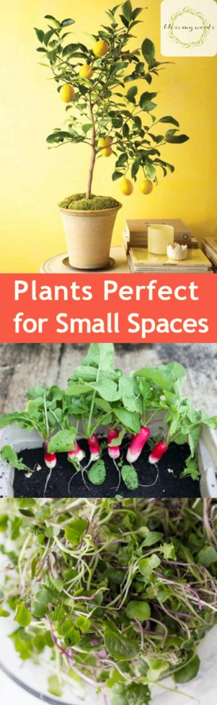 Plants Perfect for Small Spaces - Small Space Plants, Plants for Small Spaces, Plants for Small Gardens, Gardening, Gardening Plants, Gardening 101, Small Space Gardening, Popular Pin