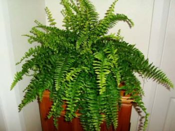 Top 7 low light houseplants garden pics and tips for Plants that need little care