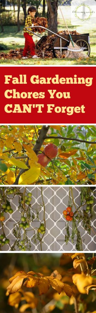 Fall Gardening Chores You CAN'T Forget - Bless My Weeds| Fall Gardening Tips and Tricks, Fall Gardening Chores, Gardening Chores, Fall Gardening, Fall Landscaping, Outdoor Fall Chores, How to Get Your Garden Ready for Winter, Popular Pin, Gardening, Gardening Tips and Tricks