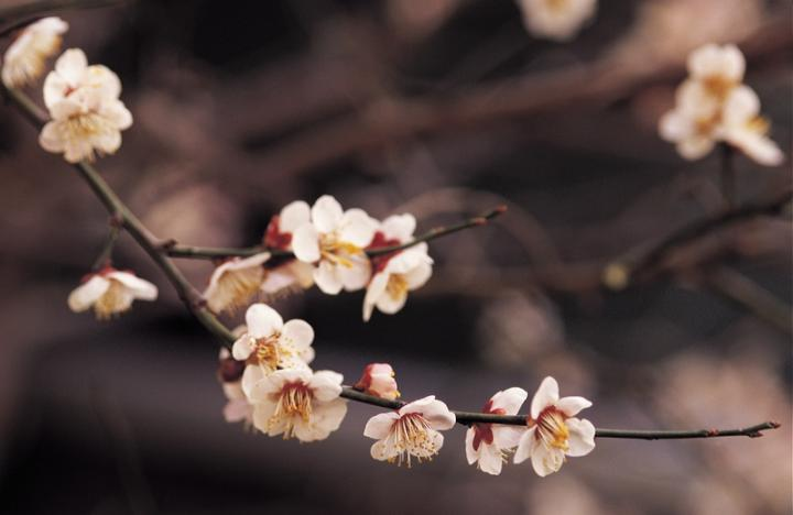How to Force Spring Blossoms Indoors! | Forcing Spring Blossoms, Forcing Spring Blossoms Indoors, Tips to Force Spring Blossoms Indoors, Indoor Gardening, Indoor Gardening Tips and Tricks, How to Force Tulips, Forcing Tulips Indoors, How to Grow Tulips, Gardening Tips and Tricks, Popular Pin