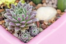 Propagate Succulents in 4 Super Simple Steps - Bless My Weeds| How to Propagate Succulents, Propagating Succulents, Growing succulents, How to Grow Succulents, Simple Ways to Propagate Succulents, How to Propagate Plants, How to Propagate Plants, Succulent Growth Tips, Popular Pin