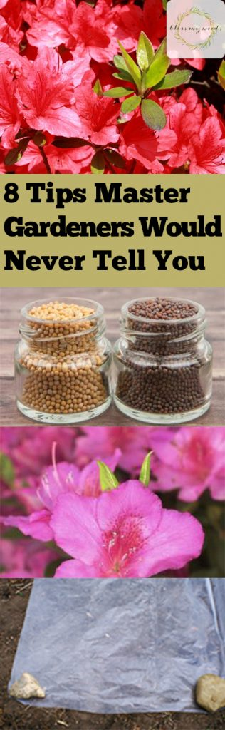 8 Tips Master Gardeners Would Never Tell You - Bless My Weeds| Master Gardeners Tips, Master Gardening, Master Gardener Tips, How to Be A Master Gardener, Indoor Gardening, Indoor Gardening Hacks, Master Gardener, Gardening Tips and Tricks for Beginners, Popular Pin