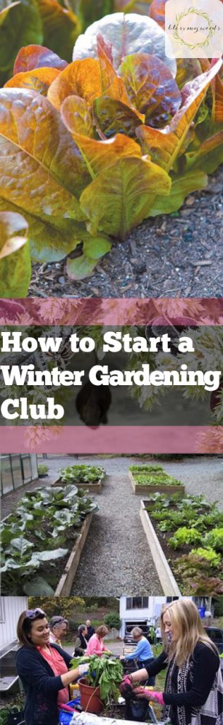 How to Start a Winter Gardening Club - Bless My Weeds| Gardening Club, How to Start A Winter Gardening Club, Gardening, Gardening Hacks, Winter Gardening Projects, Gardening. #WinterGardening #WinterGardeningProjects #Garden #GardenClub