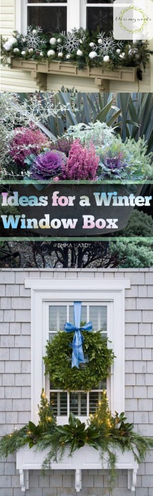 Ideas for a Winter Window Box - Bless My Weeds| Winter Window Box Decor Ideas, DIY Winter Window Box, Outdoor Window Boxes, Holiday Winter Window Boxes, Christmas, Christmas Decor, Outdoor Christmas Decor, Winter Gardening Projects