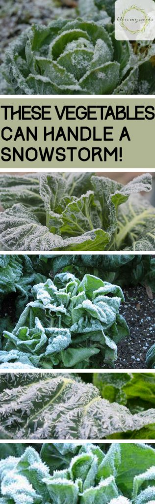These Vegetables Can Handle a Snowstorm! - Bless My Weeds| Winter Vegetables, Winter Vegetable Tips and Tricks, How to Grow Winter Vegetables, Gardening, Indoor Gardening, Indoor Gardening Hacks, Winter Gardening, Winter Gardening 101, Popular Pin