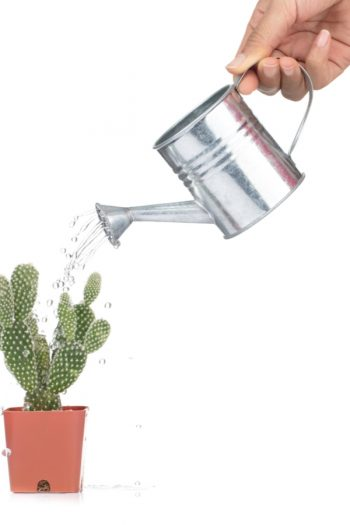 There is a right way and a wrong way when potting succulents. But if you know the correct tips, potting succulents can be a fun and successful indoor gardening hobby! And make sure you only water when the soil starts to feel dry. You don't want to over-water succulents.