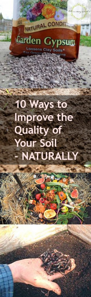 10 Ways to Improve the Quality of Your Soil-NATURALLY - Bless My Weeds| Soil Quality, How to Improve Soil Quality, Gardening, Gardening Hacks, Gardening Tips and Tricks, How to Improve Soil, Popular Pin #SoilQuality #Gardening #GardeningTips