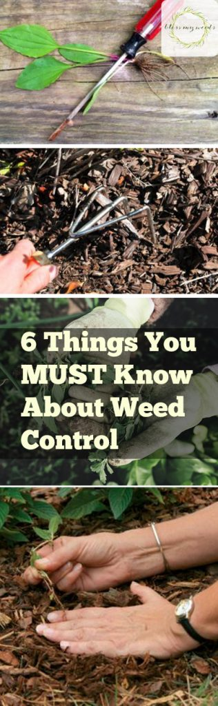 6 Things You MUST Know About Weed Control - Bless My Weeds| Weed Control, Weed Control Tips, Gardening, Gardening Tips, Weed Control 101, Weed Control Hacks, Gardening Hacks, Popular Pin #Gardening #WeedControl #WeedControlTips
