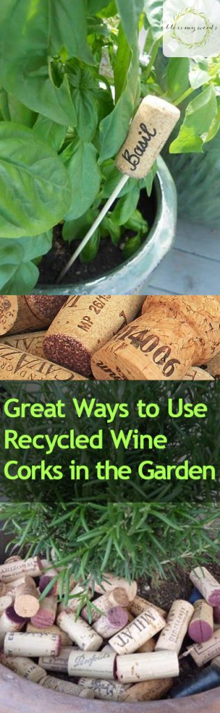 Great Ways to Use Recycled Wine Corks in the Garden - Bless My Weeds| Wine Corks, Wine Cork Crafts, Garden, Gardening Hacks, How to Reuse Recyled Wine Corks, Wine Cork Crafts for the Garden, Gardening Tips, Repurpose Projects #GardeningTips #WineCorkCrafts #RepurposeProjects