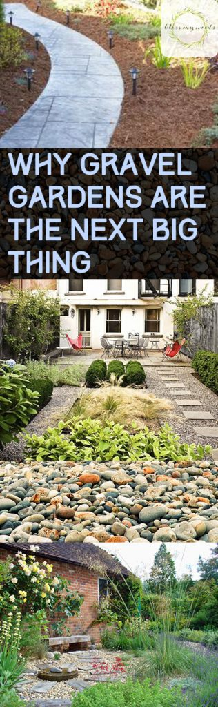 Why Gravel Gardens Are the Next Big Thing - Bless My Weeds| Gravel Gardening, Gravel Gardening Design, Garden Design, Gardening Tips and Tricks #Gardening #GravelGarden #GardenDesign