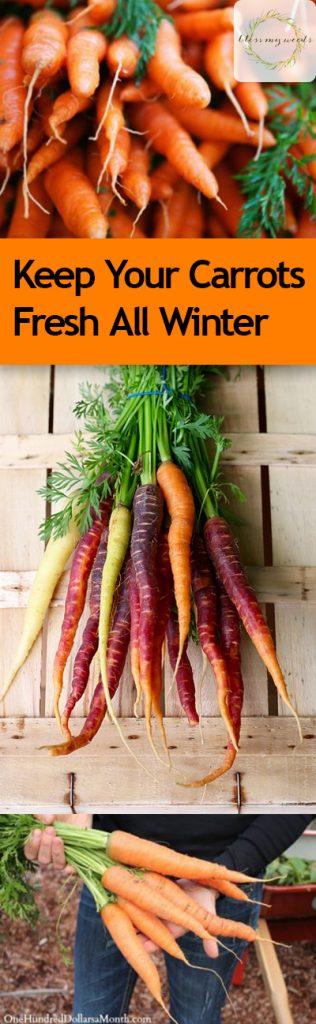Keep Your Carrots Fresh All Winter - Bless My Weeds| Gardening, Gardening Hacks, Gardening Tips and Tricks, How to Keep Produce Fresh, Gardening, Gardening Tips and Tricks, Carrot Preservation, Popular Pin #Gardening #GardeningHacks