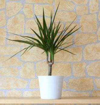 Indoor Trees That Are Guaranteed to Liven Up Any Space| Indoor Gardening, Indoor Gardening Hacks, Gardening, Gardening Hacks, Growing Trees, How to Grow Indoor Trees, Gardening 101, Quick and Easy Gardening Hacks, Popular Pin #IndoorGarden #IndoorGardening