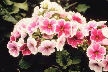 10 Flowers That LOVE Wet Soil - Bless My Weeds| Garden Ideas, Gardening, Garden, Gardening for Beginners, Plants, Flower Garden, Flower Garden Ideas, Flower Gardening #FlowerGarden #FlowerGardenIdeas #FlowerGardening #GardeningforBeginners, Garden #Gardening