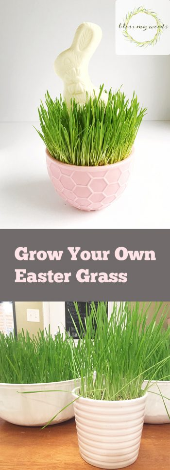 Grow Your Own Easter Grass for Fast Spring Gardening - Bless My Weeds| Spring Gardening, Spring, Spring Garden Ideas, Gardening Ideas, Easter Grass, Easter Grass Crafts, #SpringGardening #SpringGardeningIdeas #EasterGrassCrafts