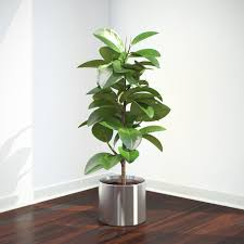 Plant Encylopedia: Ficus - Bless My Weeds| Gardening, Gardening Tips, Gardening Hacks, Garden Hacks, DIY Garden Ideas, Gardening Ideas, Indoor Gardening, Indoor Gardening Ideas, Indoor Gardening for Beginners #Gardening #GardenIdeas #IndoorGarden
