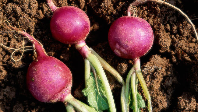 NEVER Plant These Veggies Together - Bless My Weeds| Gardening for Beginners Vegetable, Vegetable Garden, Vegetable Gardening, Backyard Gardening, Gardening TIps, Garden for Beginners, Gardening for Beginners, Gardening Ideas, Gardening Design #VegetableGardening #GardeningforBeginnersVegetable #VegetableGardenIdeas #Gardening
