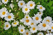 Perfect Perennials for the Pacific Northwest - Bless My Weeds  Perennial Plants, How to Grow Perennial Plants, Growing Perennial Plants, Easily Grow Perennial Plants, Perennial Care, Gardening, Gardening Care Tips, Tips for Gardening Care #Perennial #PerennialGardening #Gardening