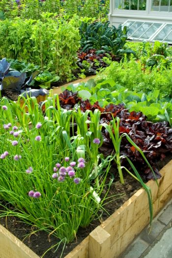 Planning on vegetable gardening? Keep these gardening tips and tricks in mind! A simple guide to avoid planting the wrong veggies next to each other ever again. Vegetable gardening hacks that you never knew about until now! Ideas to help you grow the perfect vegetables.