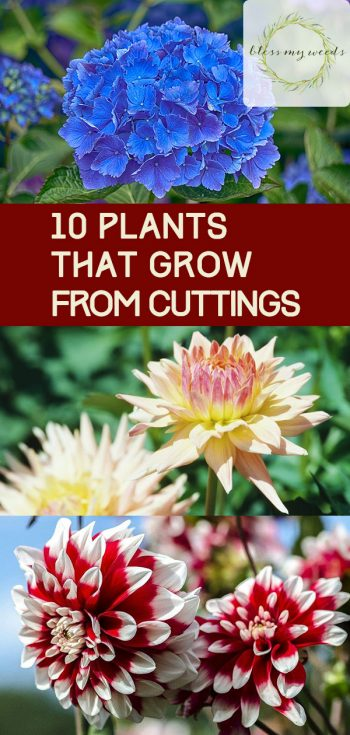 10 Plants That Grow From Cuttings - Bless My Weeds| Gardening, Garden, Propagating Plants, Propagating Succulents, Propagating Aloe Vera, Garden Ideas, Gardening, Gardening Ideas