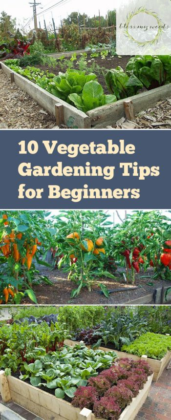 10 Vegetable Gardening Hacks Beginners NEED to Know - Bless My Weeds| Vegetable Gardening, Vegetable Gardening Tips for Beginners, Gardening Tips, Garden Ideas, Gardening Ideas, Gardening for Beginners