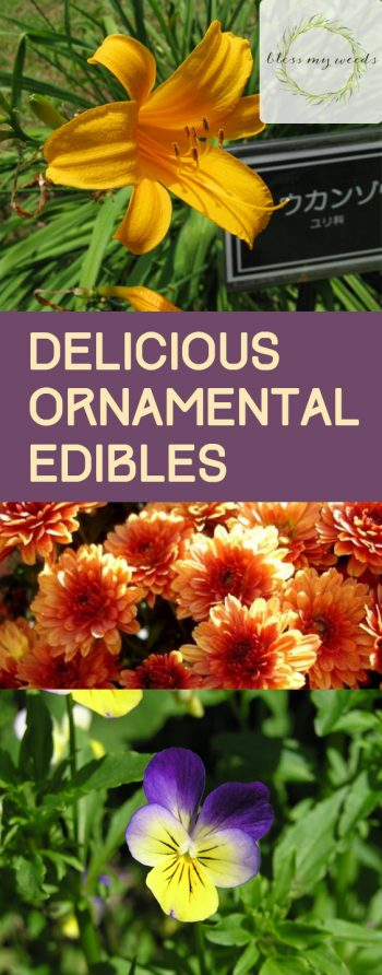 Delicious Ornamental Edibles - Bless My Weeds| Ornamental Edibles, Ornamental Edible Plants, Flower Garden Ideas, Gardening for Beginners, Garden Ideas, Edible Garden Ideas