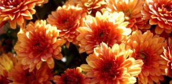 Delicious Ornamental Edibles - Bless My Weeds| Ornamental Edibles, Ornamental Edible Plants, Flower Garden Ideas, Gardening for Beginners, Garden Ideas, Edible Garden Ideas
