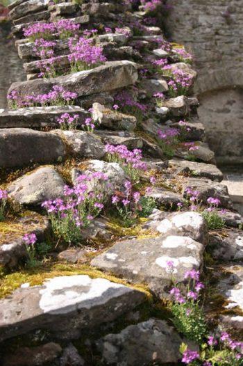 10 Gorgeous Crevice Garden Ideas | Crevice Garden Ideas | Crevice Garden | Gardening | DIY Garden Ideas | Gardening