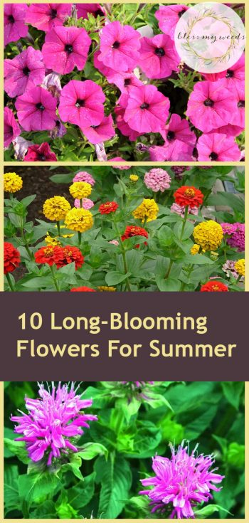 10 Long-Blooming Flowers For Summer | Long-Blooming Flowers | Summer Flowers | Summer Gardening | Garden | Flowers