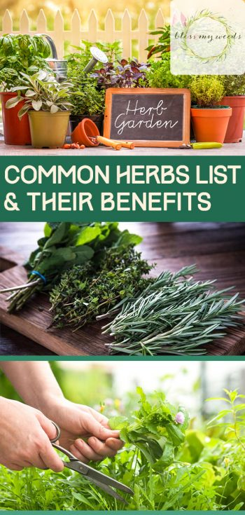 Common Herbs List & Their Benefits | Common Herbs | Benefits of Common Herbs | Herbs and Their Benefits | Herbs