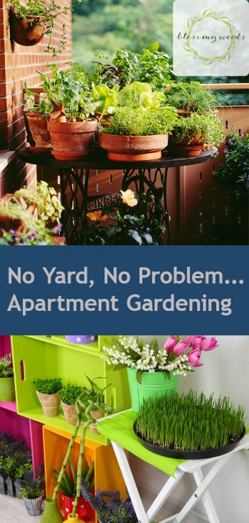 No Yard, No Problem….Apartment Gardening | Apartment Gardening | How to: Apartment Gardening | Gardening | Apartment Life | Apartment  Tips and Tricks