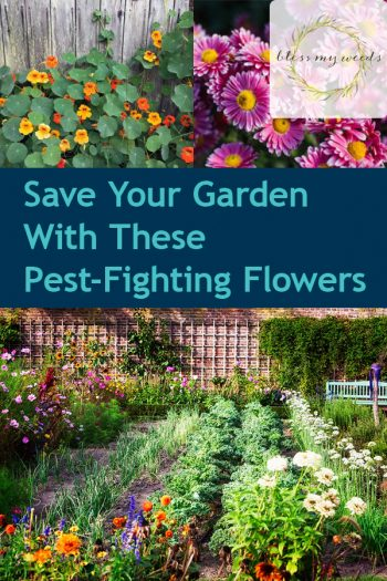 Save Your Garden With These Pest-Fighting Flowers | Garden | Flowers | Flowers That Fight Pests | Gardening Tips and Tricks