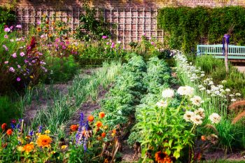 Save Your Garden With These Pest-Fighting Flowers   Garden   Flowers   Flowers That Fight Pests   Gardening Tips and Tricks