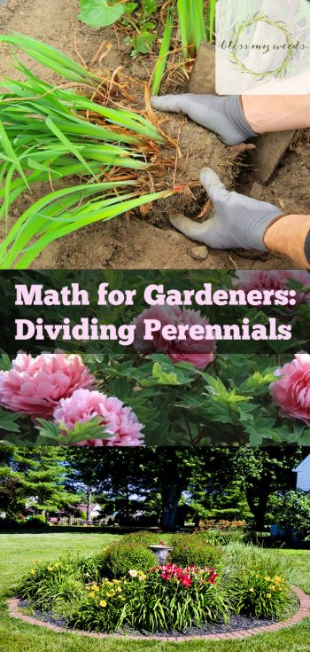 Dividing Perennials | How to Divide Perennials | DIY Garden | Gardening Tips | Flower Gardening Tips | How to Plant and Care for Perennials | Perennials Tips and Tricks