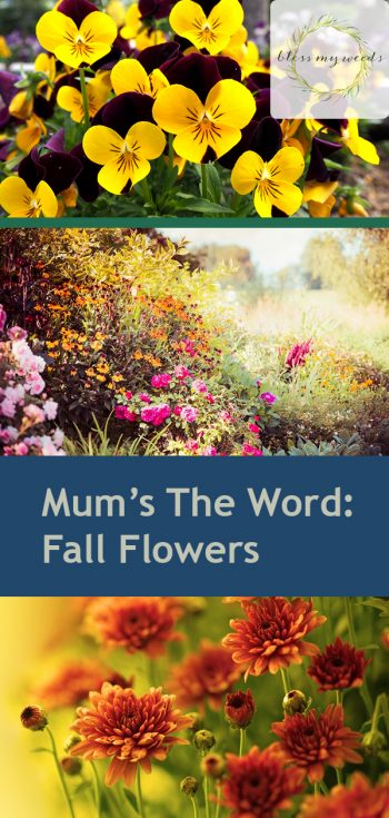 Fall Flowers | Fall Gardening Ideas | Mums for Your Fall Garden | DIY Fall Gardening | Fall Flowers for Your Fall Garden | Garden