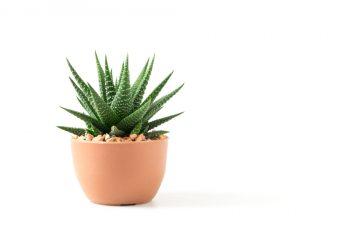 Succulent Pots | Succulent Pots for Happy Plants | Succulent Care Tips and Tricks | Caring for Succulents | Succulents