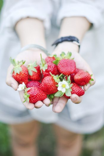 Here are the best tips and tricks for planting strawberries.Never make these common mistakes again with this guide to perfect strawberry plants! Grow your best strawberry crop yet! YUM!